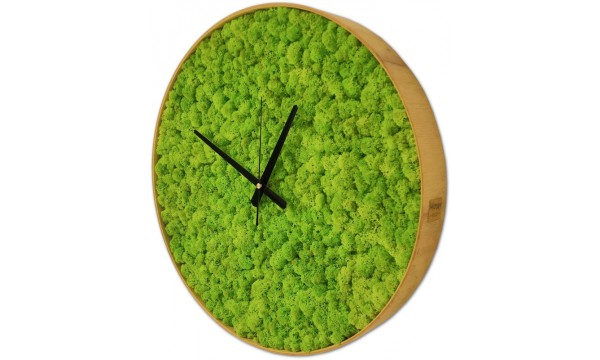 Mossy Time